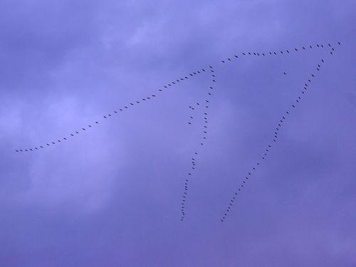 Vol-oiseaux3