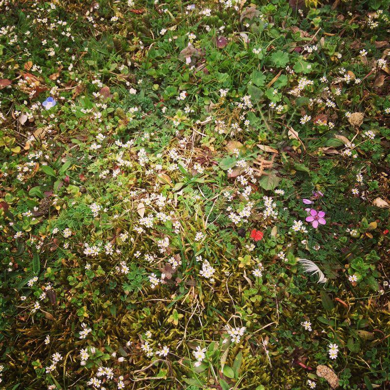 Fleurs-printanieres