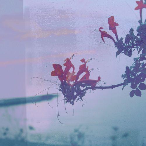 Fines fleurs du jour