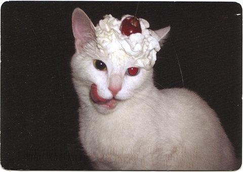 Cerise sur le gato